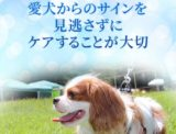【毎日健心(コエンザイムQ10&フランス海岸 松)】愛犬の心臓は大丈夫?獣医師推奨サプリ