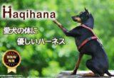 フィット感、装着しやすさ、デザイン性、壊れにくさなどから、ペット先進国のヨーロッパだけでなく世界27ヶ国の愛犬家、ドッグトレーナー、救助犬、警察犬などから愛用【Haqihanaハキハナハーネス】