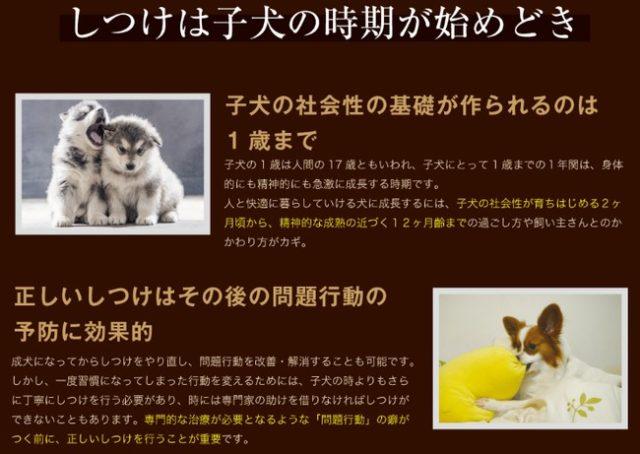愛犬の成長に合わせて毎月育て方本と、愛犬に合ったグッズをお届る【こいぬすてっぷ】