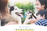 【カナガンデンタルドッグフード】毎日の食事で愛犬のキレイをしっかりサポート