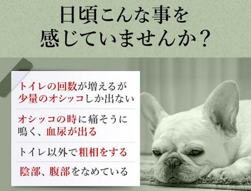 7種類の成分を1粒に凝縮した腎活をサポートする犬用サプリメント【活性炭&ウラジロガシ】