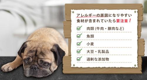イギリス大手メディアBBC掲載!顧客満足度「96%」!愛犬の体&地球を守る昆虫フード登場!ペット先進国イギリスで誕生した昆虫ベースのドッグフード【ヨラドッグフード】