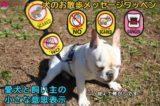 【犬のお散歩メッセージワッペン】日本初!犬の飼い主様のお悩み解決アイデア商品