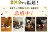 【アイズワン】犬の眼のトラブル対策に作られたサプリメント