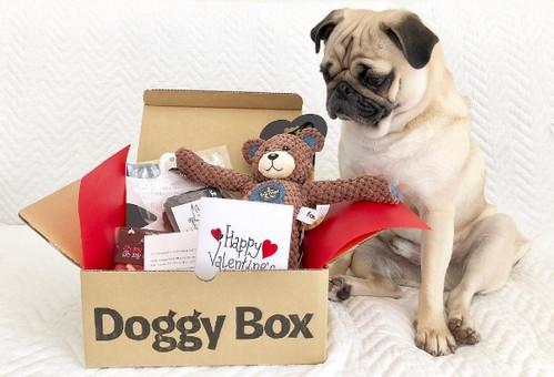 「忙しくておもちゃやおやつを選ぶ時間がない方」や「もっとワンちゃんと触れ合う時間を大切にしたい方」、「おもちゃが大好きなワンちゃんを飼っている方」に【ドギーボックス(Doggy Box)】