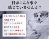 【毎日一緒 DHA&EPA】7種類の成分配合!シニア犬サプリ