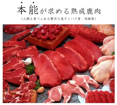 【犬の食事療法(療法食)】犬の癌・腫瘍対策の特別療法食