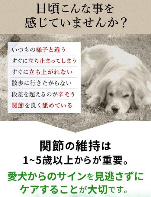 【毎日散歩】犬用関節サプリ!筋肉成分と軟骨成分配合