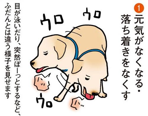 犬の熱中症の症状とは?