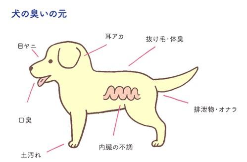犬が臭い原因は?病気?