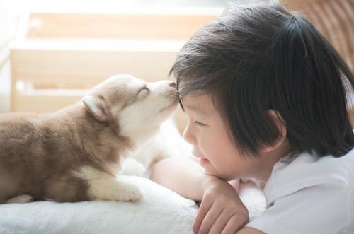 愛犬が長生きする秘訣!