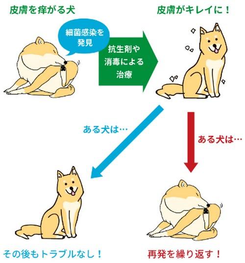 犬が痒がる原因!