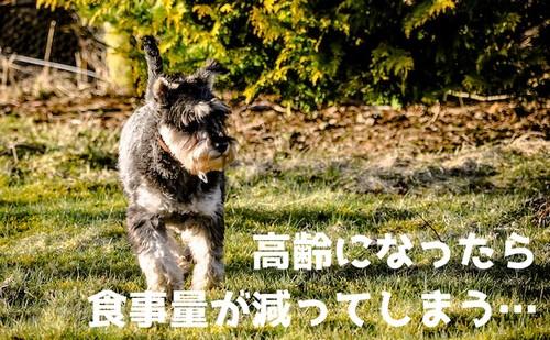 偏食・少食の愛犬と向き合おぅ