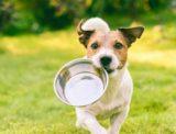 犬にあさりを食べさせると危険!