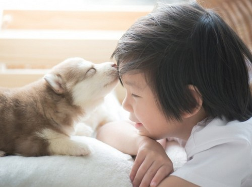 犬を飼うのに必要な準備や覚悟