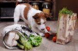 犬に必要なビタミンって?
