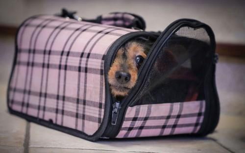 犬と電車に乗るときの注意点って?
