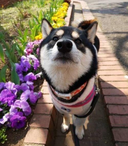 犬が食べたら危険な花!大丈夫な花?