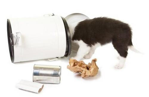 犬が腐った物を食べた!症状や治療法!