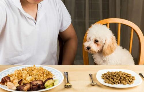 犬はお米を食べても大丈夫!