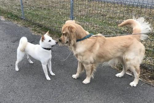 犬同士の挨拶って?