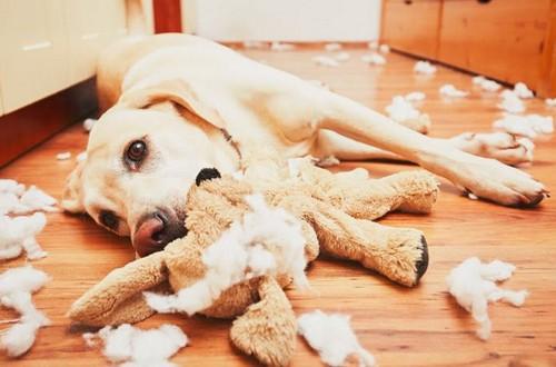 犬の反抗期って?