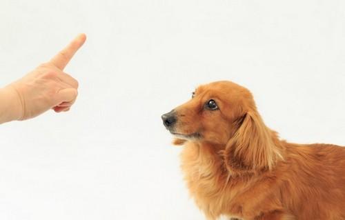 犬に[伏せ]の教え方!