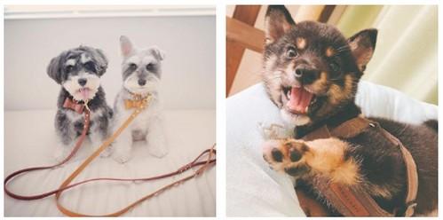 【ドッグウェア通販(モンシェリ)】インスタで大人気!超人気犬服ブランド