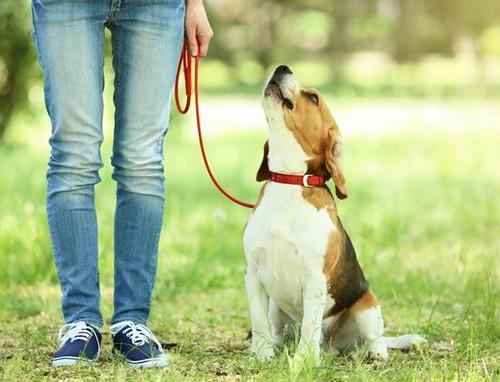 子犬の散歩はいつから?