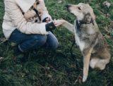 保護犬のしつけって難しいの?