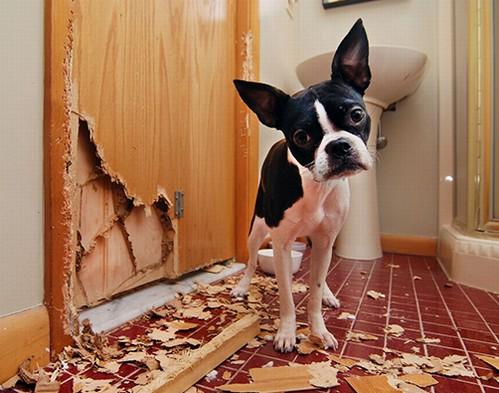 犬の問題行動ってなぜ起こるの?