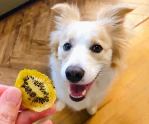 犬がドライフルーツを食べても大丈夫なの?
