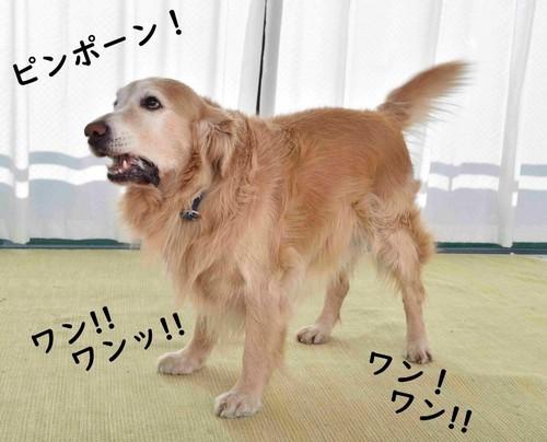 来客時に犬が吠える理由って?