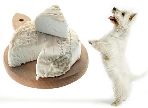 犬にチーズを与えても大丈夫!
