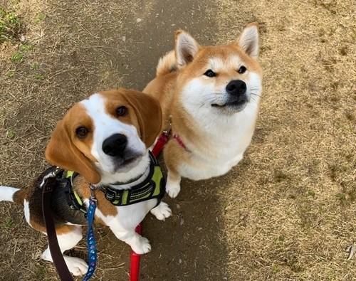 愛犬との主従関係を築くのは間違い?