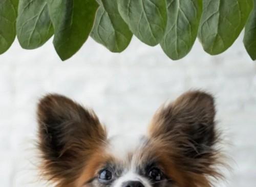 犬がほうれん草を食べても大丈夫?