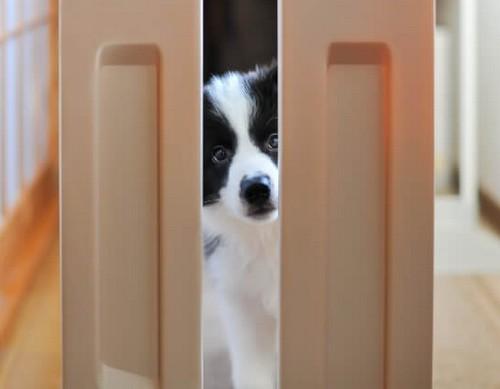 犬の分離不安って?