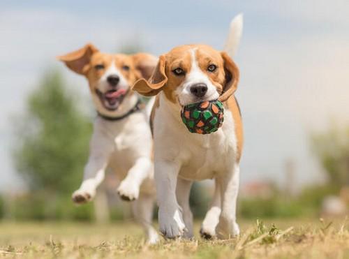 犬と遊ぶのはコミュニケーションの一環!