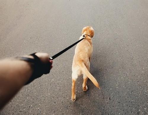 犬の引っ張り癖のしつけ方!