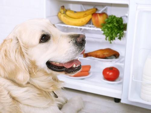 犬にバナナを与えても大丈夫!